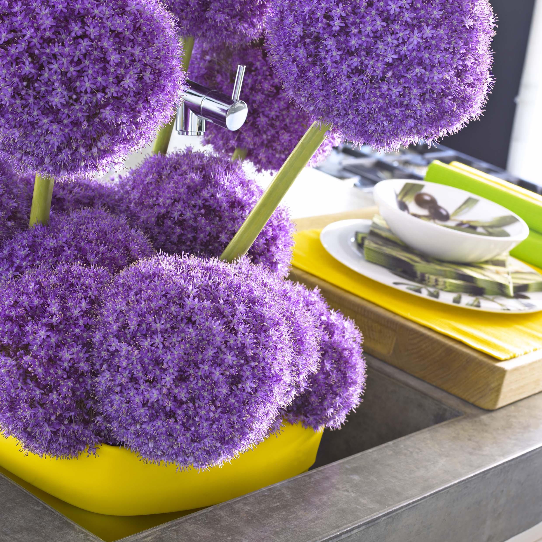 Allium fiori dell'aglio fiore aglio