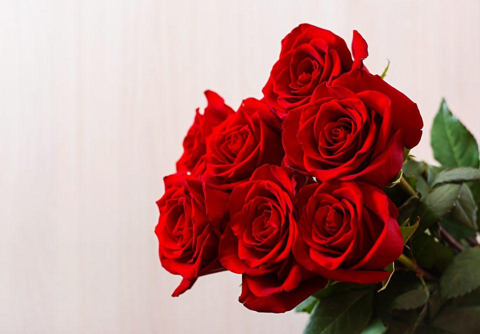 rosa rose ingrosso