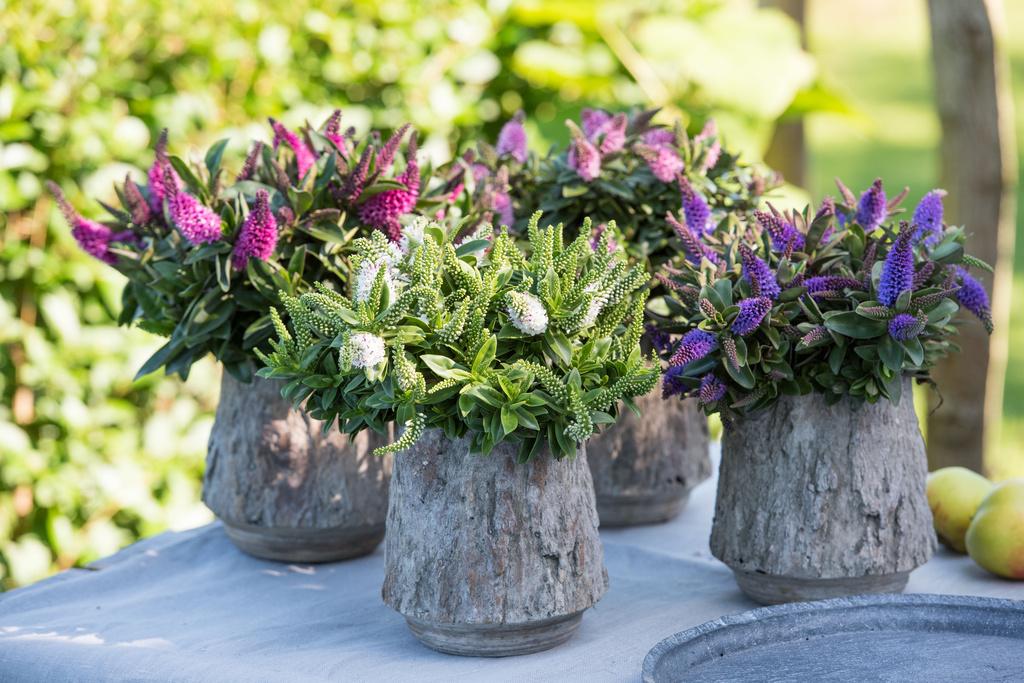 hebe ingrosso fiori agosto gambin milano italia lombardia
