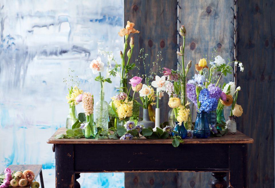 giacinto, narciso, fresia, primavera, significato, mitologia