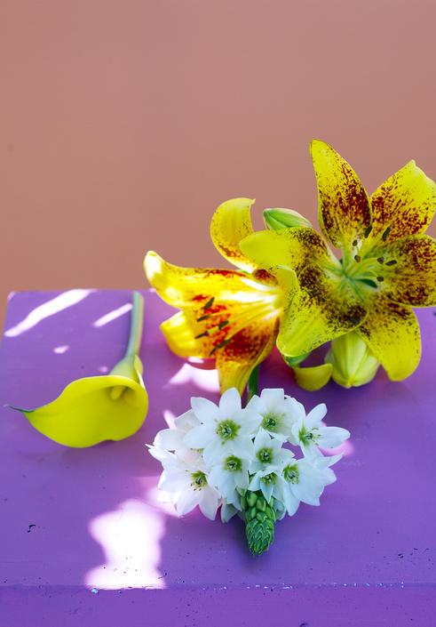 giglio orchidea stella di betlemme