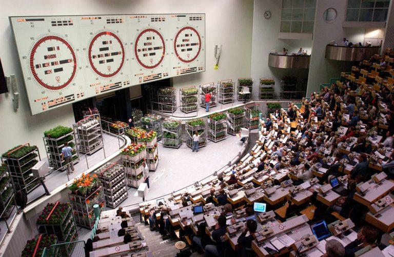 mercato fiori milano olanda asta dei fiori ecommerce online