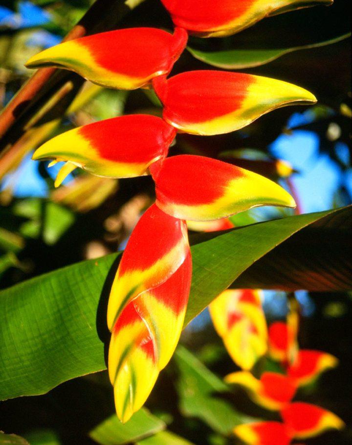 ecuador fiori importazione biodiversità