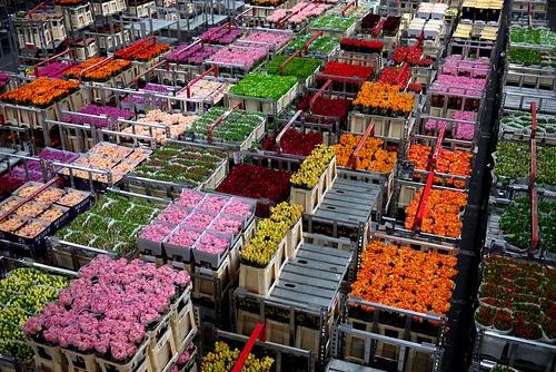 ingrosso fiori milano online magazzino