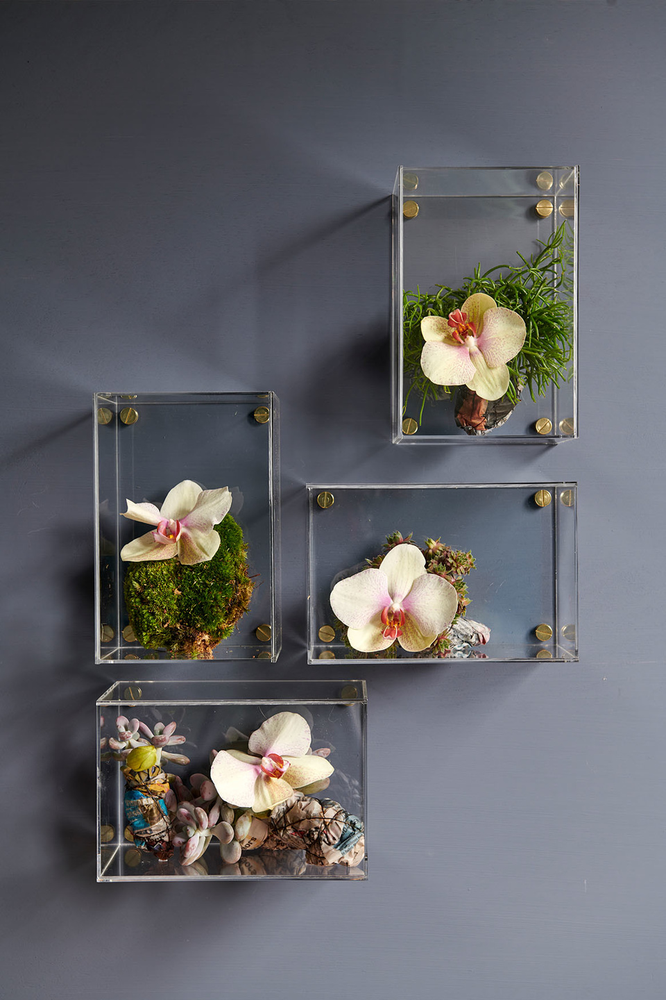 orchidea orchidee milano ecommerce ingrosso