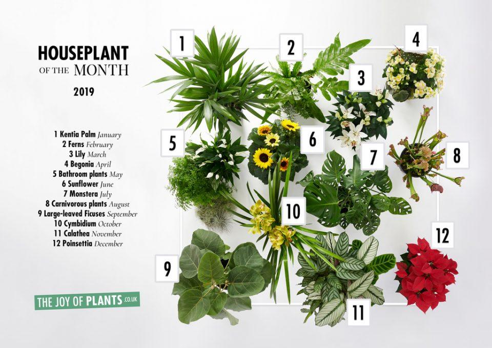 agenda delle tendenze 2019 piante da interno