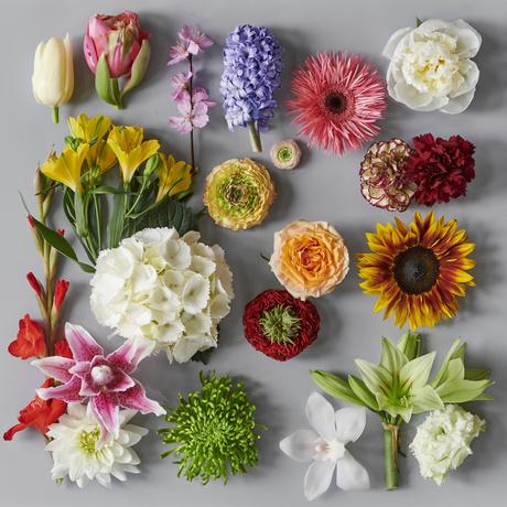 fiori tendenze stagionali 2019 fiorik di bach crisantemo rosa tulipano bacchifere amaryllis