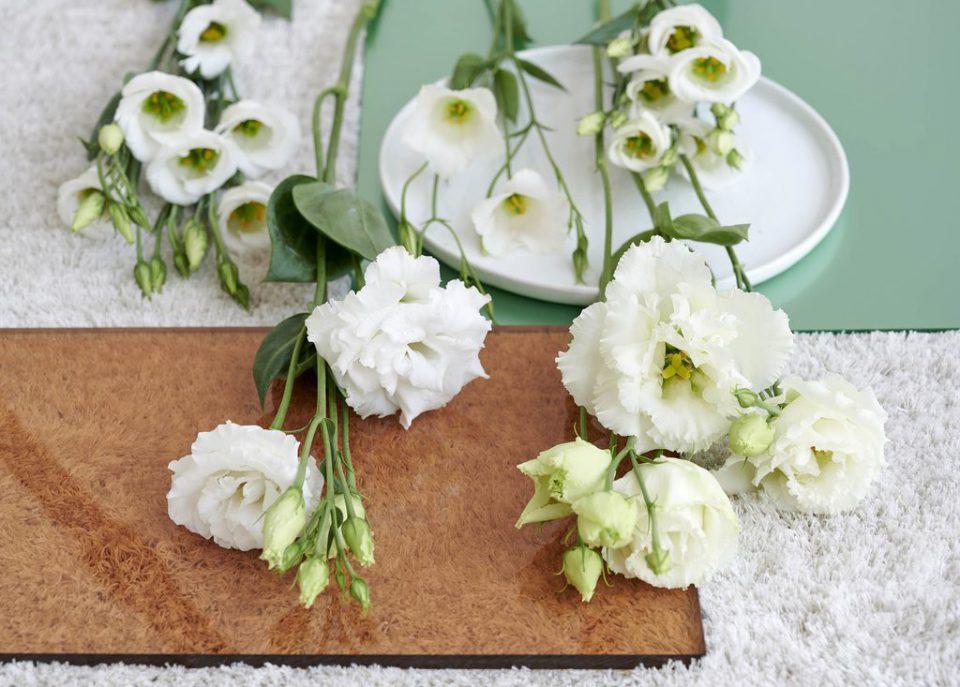lisianthus ingrosso fiori milano