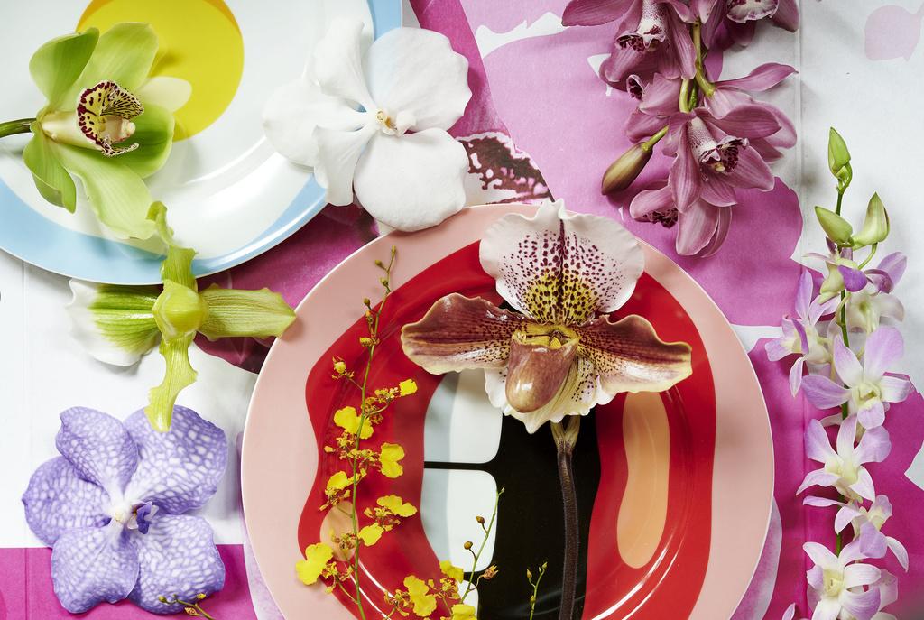 orchidea orchidee recise ingrosso fiori milano